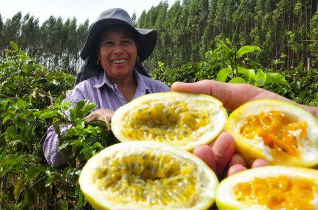 GDF vai comprar alimentos de pequenos agricultores para distribuir à população