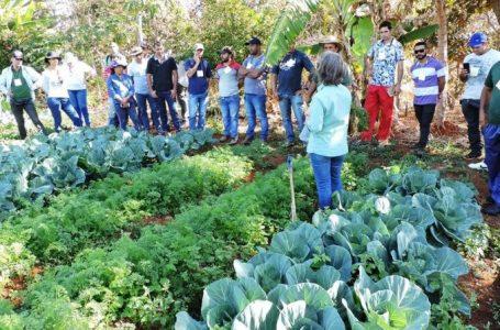 Emater-DF comemora 42 anos com crescimento na produção agropecuária da capital
