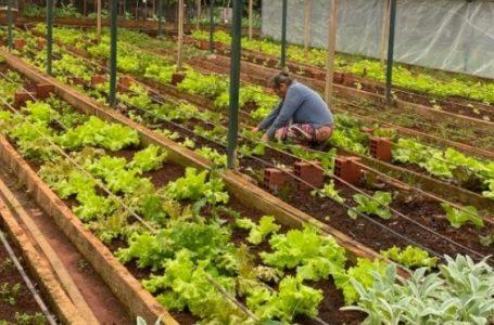 Impulsionado pelo consumo, cresce produção de orgânicos na capital